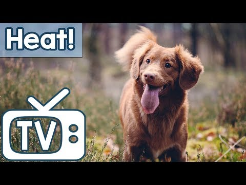 Dog TV: TV for Dogs During Hot Weather! Calm Your Dog in the Summer Heat with this TV and Music!