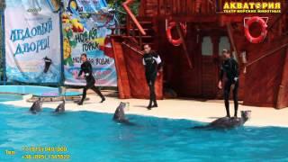 """Театр морских животных """"Акватория"""" (Ялта): танец дельфинов и людей"""