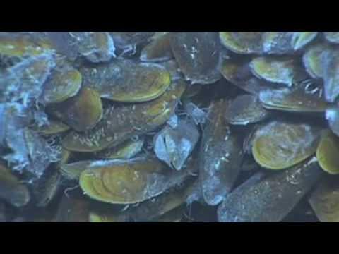 Census of Marine Life - VNR Deep Sea Dive