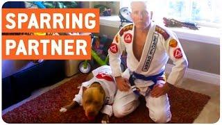 Dog Jiu Jitsu Partner | Worst Sparring Partner Ever