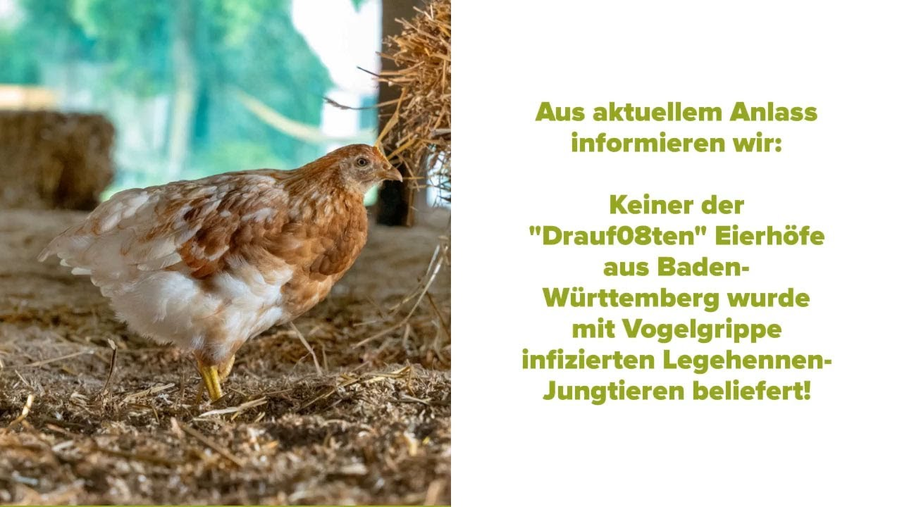 Vogelgrippe in Baden-Württemberg