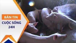 Hà Tĩnh: Người nuôi lợn chưa được cứu   VTC1