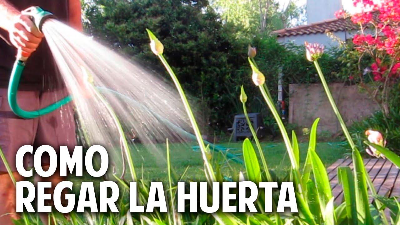 Como regar las plantas de la huerta y el jardin ...