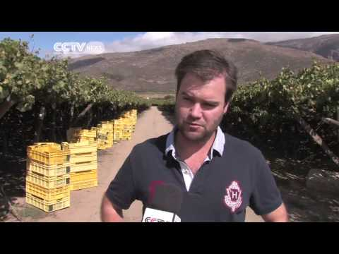 South Africa Grape Boom