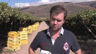 south africa grape boom