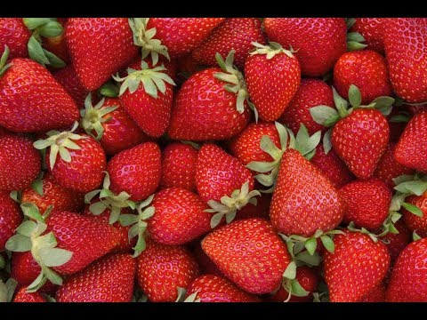 Industrial Agriculture and the Humble Strawberry
