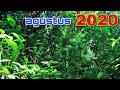 Suara Hutan Yang Mengagumkan Suara Alam Indonesia Hutan Mentawai  Mp3 - Mp4 Download