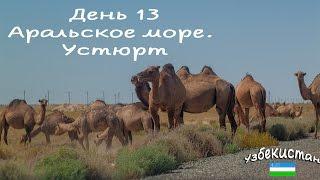 Узбекистан. 13 день. Аральское море, змеи, верблюды) Vlog
