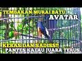 Tembakan Murai Batu Avatar Milik Om Azka Alfarisi Keras Dan Rapat Sadis Pantes Kalau Juara Terus  Mp3 - Mp4 Download