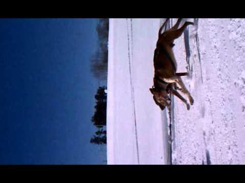 82nd World Championship Sled Dog Derby, Laconia, N