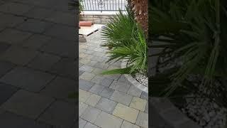 San Michele, la palma nana e lo strano fenomeno del ramo che si muove