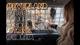 ТОП достопримечательностей Сеула : ПАРК EVERLAND | Zootopia