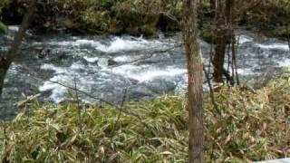 ハルニレテラスの中を流れる小さな小川.