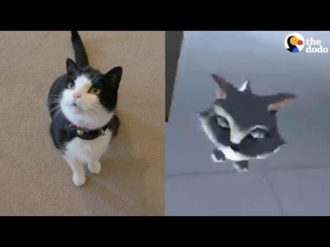 Cat Virtual Reality Tracker | The Dodo