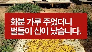 봄에 벌화분 선별하면서 모아 둔 화분가루는 무밀기에 벌…