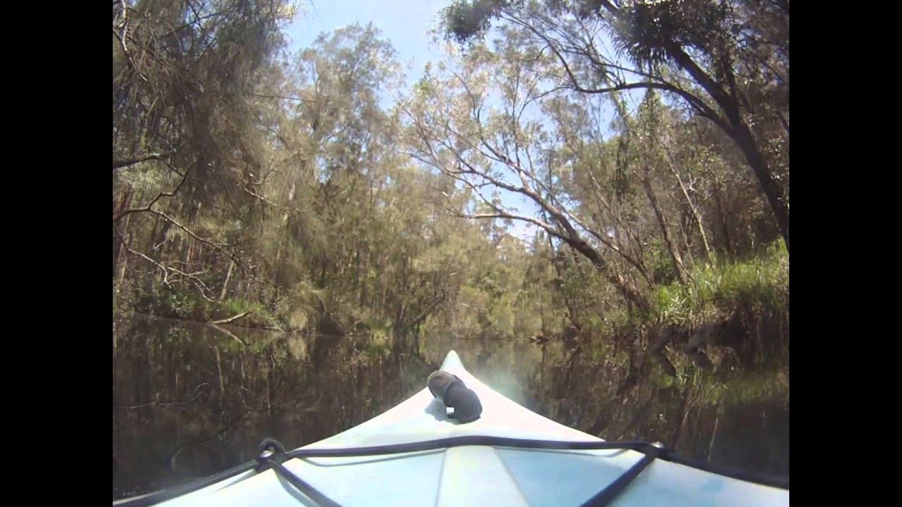 Australia Wallingat Np Wallingat River Kayak Youtube