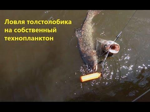 Ловля толстолобика на собственный техно-планктон