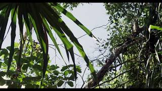 John Tejada - Autoseek (Official Video)
