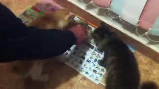 Реакция котов на куриные головы/ OMG