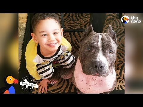 Street Dog From Puerto Rico Becomes Best Nanny To His Human Siblings | The Dodo Pittie Nation
