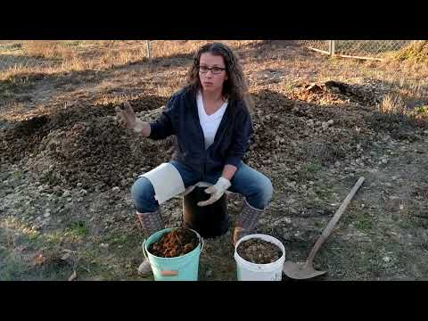 Growing On A Budget Using Horse Manure