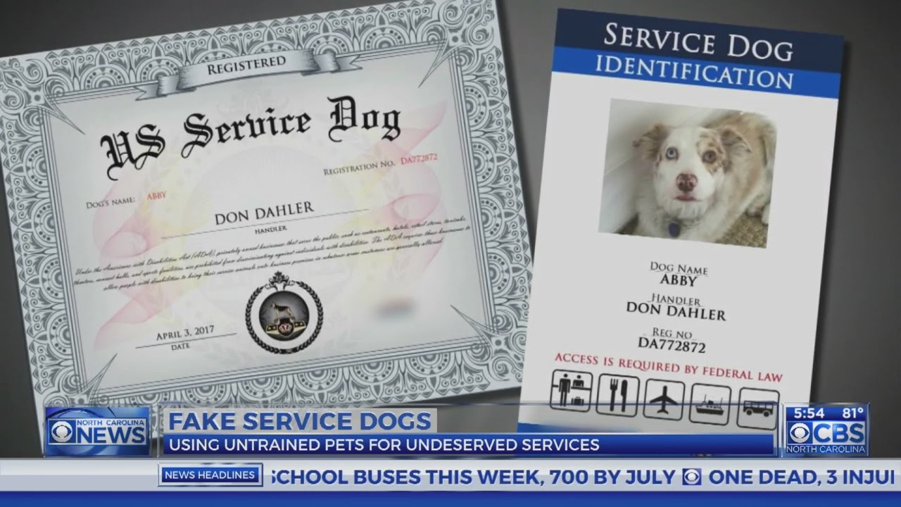 Laws aim to crack down on fake service dogs youtube laws aim to crack down on fake service dogs 1betcityfo Images