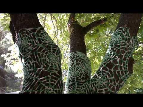 Ruta Árboles Notables del Parque la Dehesa en Soria