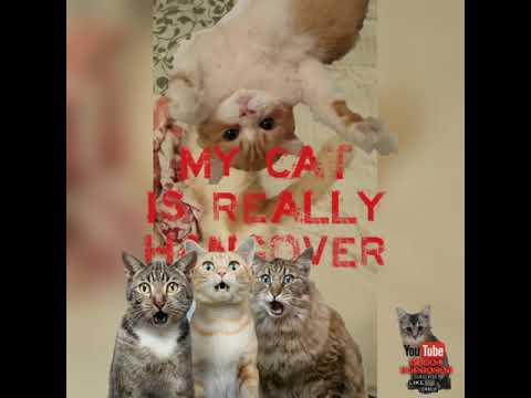 MY CATS  IS REALLY HANGOVER. DONT WANNA WAKE UP . VIRAL TRANDING. SITI NUR EMMA MAEMBONG