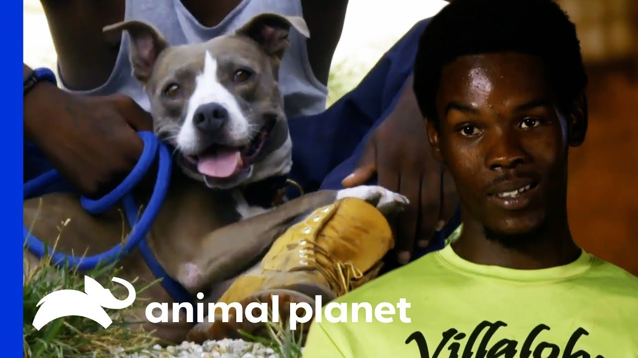 Spencer Has Turned His Life Around And Made His First Rescue Pit Bulls Parolees Youtube