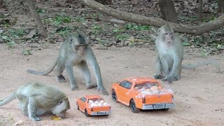 Awesome funny monkey videos - The intelligent monkeys stops RC car for eggs