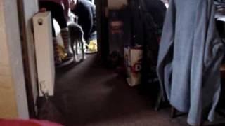 Meg At Home Pt2 - Terrier-lurcher Cross - Needs A Home! Rspca Macclesfield