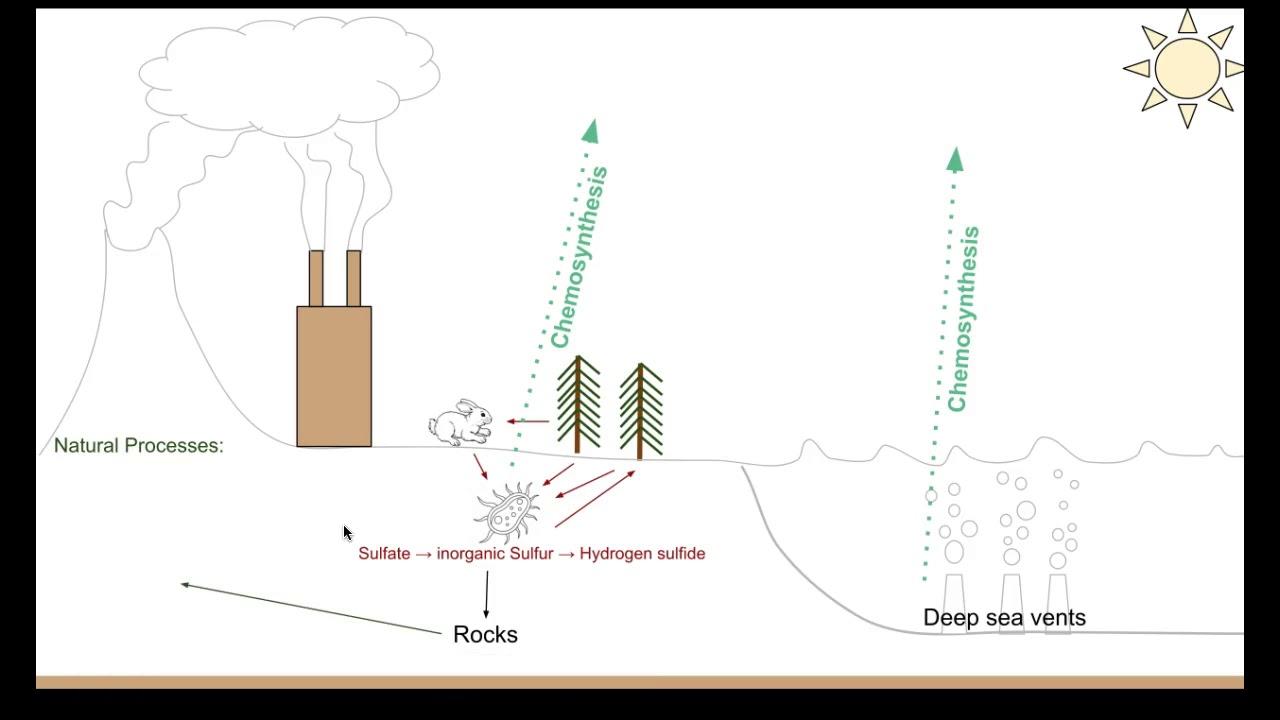 biology 20 sulfur and phosphorus cycle
