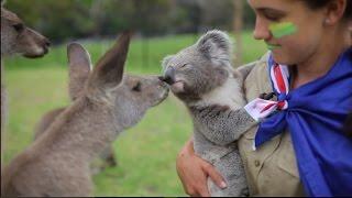 The most Australian Video Ever! Kangaroo vs Koala