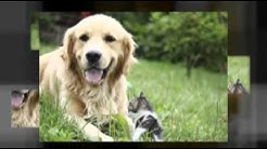 Pet Supplies & Products Online Australia