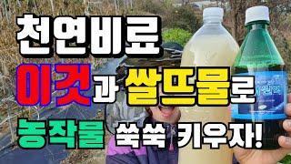 천연비료/ 착한미생물 쌀뜨물과 이것?으로 유기농작물로 …