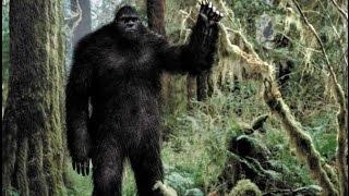 Все были в шоке, когда увидели как НЕЧТО вышло из леса. Таинственные обитатели Земли.