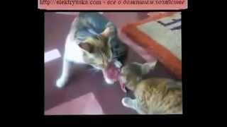 Супер Прикольное Видео Про Кошек ! Юмор ! Прикол ! Смех !