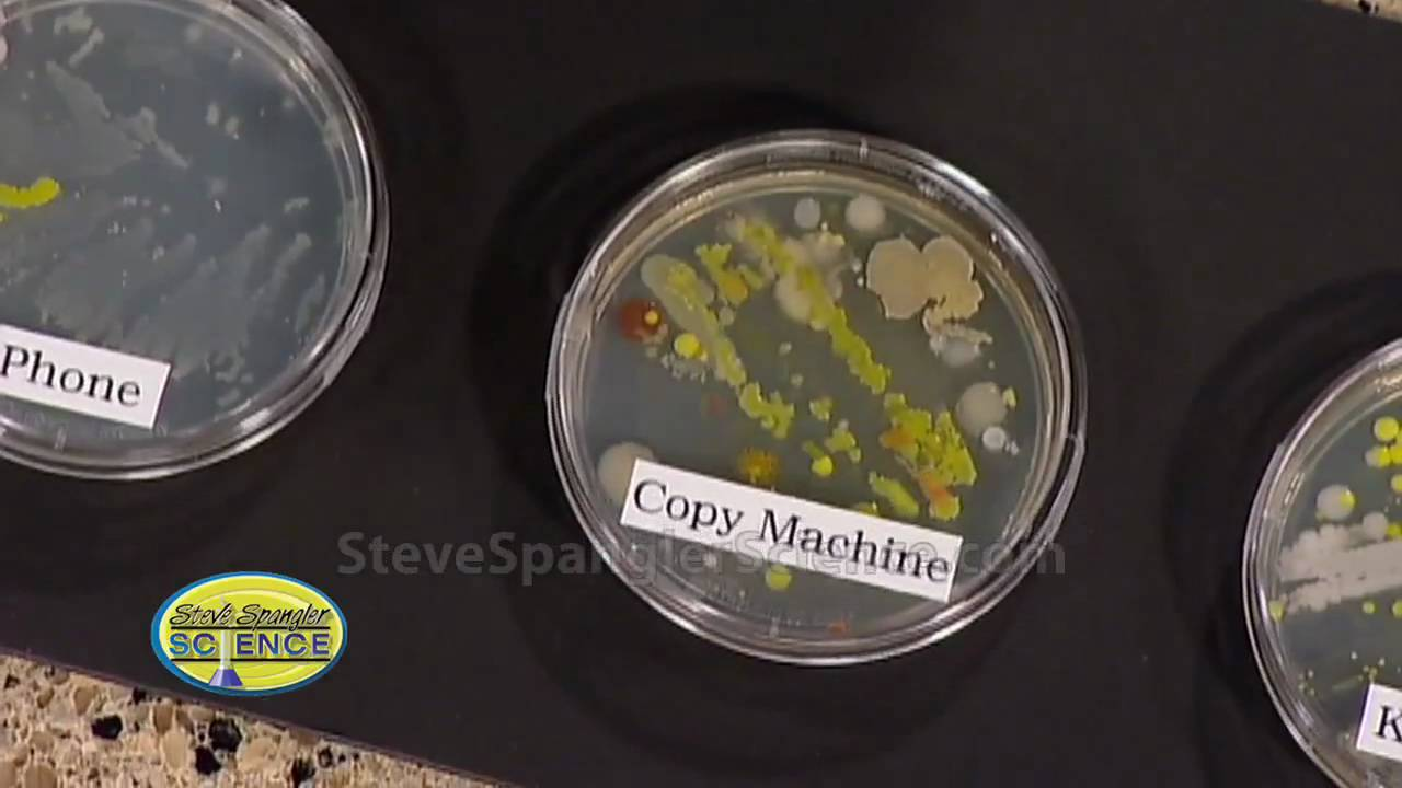 Growing Bacteria Petri Dish Youtube