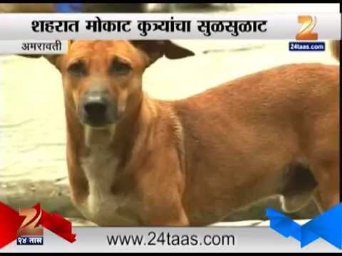 Amravati : Stray Dog Increase In The Incidence Of Rabies