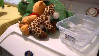 Cleaning Your Child's Stuffed Friends