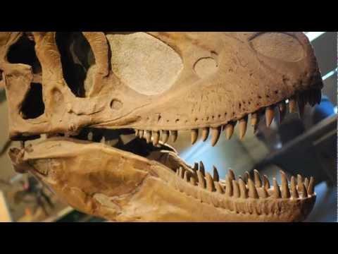 Daspletosaurus 2013
