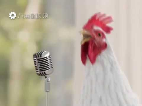 Poulet qui chante et dansent