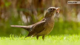 Общая характеристика птиц