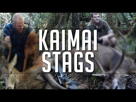 Big Game Indicating Dogs, Hunter Series - Episode One - Kaimai Stags over Vizlsa and Heading Dog