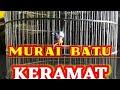 Murai Batu Gacor  Ampuh  Mp3 - Mp4 Download