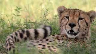 Secrets of Tanzania - Roie Galitz