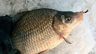 ЛОВЛЯ КАРАСЯ ЗИМОЙ НА МОРМЫШКУ Зимняя рыбалка на крупного карася Рыбалка на мормышку