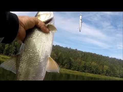 Увлекательная рыбалка на реке Уфа!!!