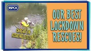 RSPCA's best rescues of lockdown!