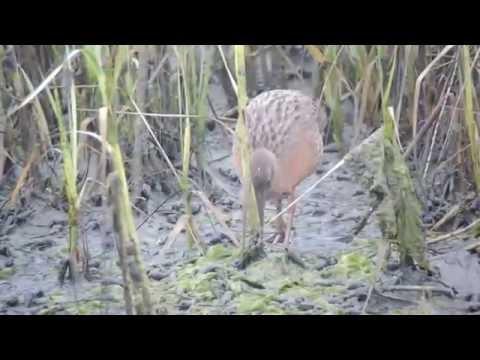 Birds of Tijuana River Estuary